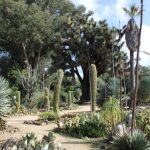 Hikes and Rambles: Arizona Garden (Stanford)