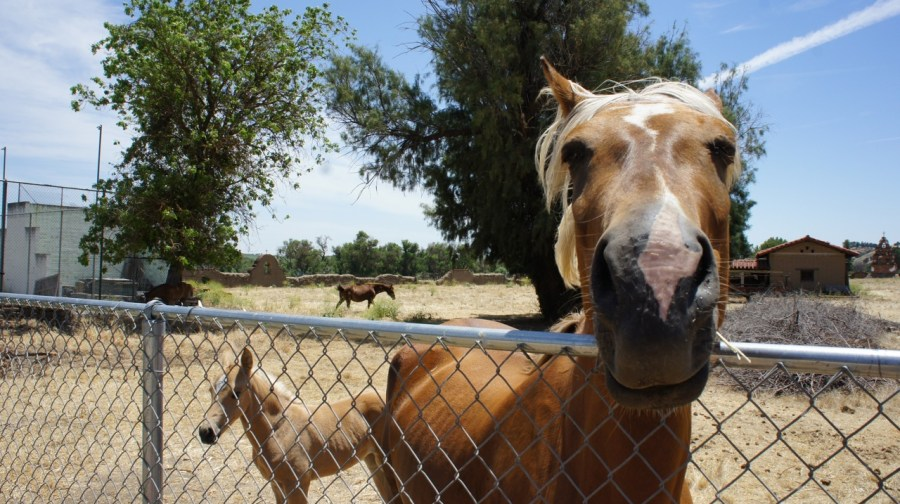 Horse at Mission San Miguel