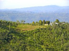 Munduk Muding Plantation View