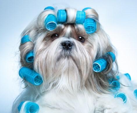 Peluqueros caninos