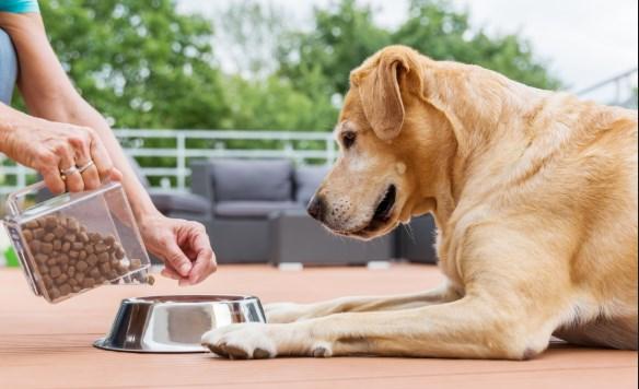 Comida para perros semihúmeda
