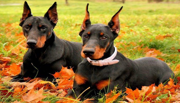 perros cariñosos