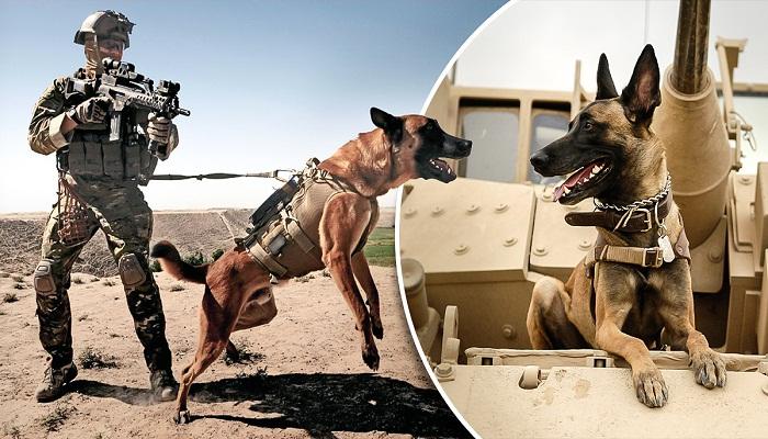 Razas de perros usados en la guerra