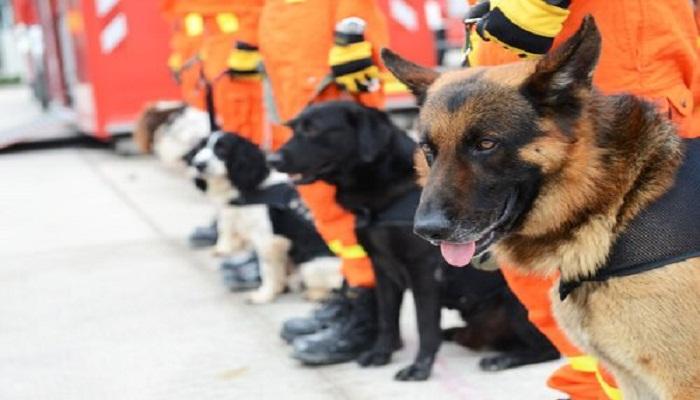 Razas de perros rastreadores de personas