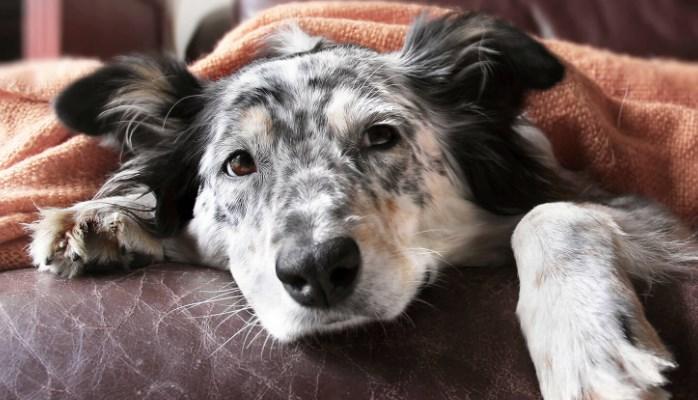 Vómitos y Diarrea en Perros