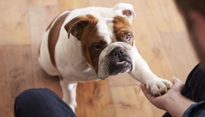 medicamentos para artrosis en perros