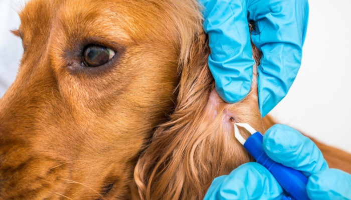 que son las pulgas en perros