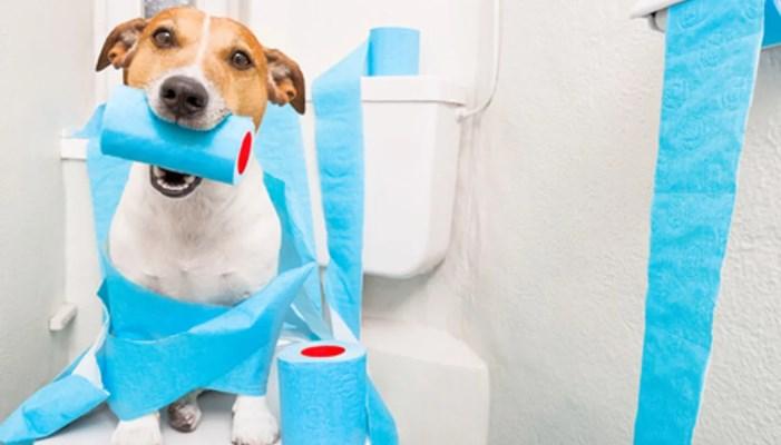 cómo curar diarrea en perros