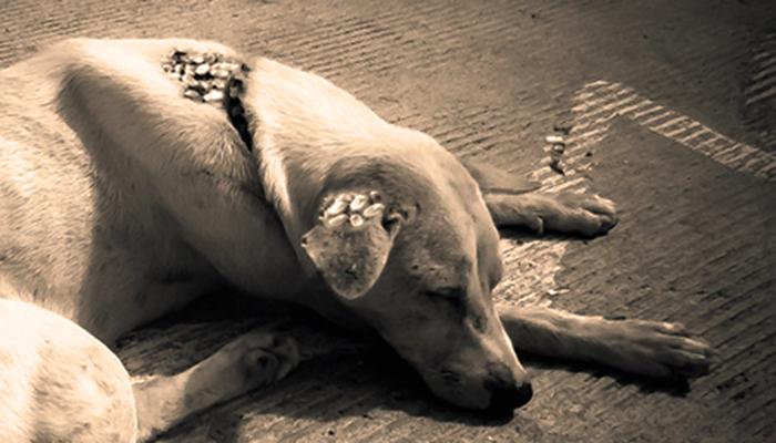 perro afectado por garrapatas