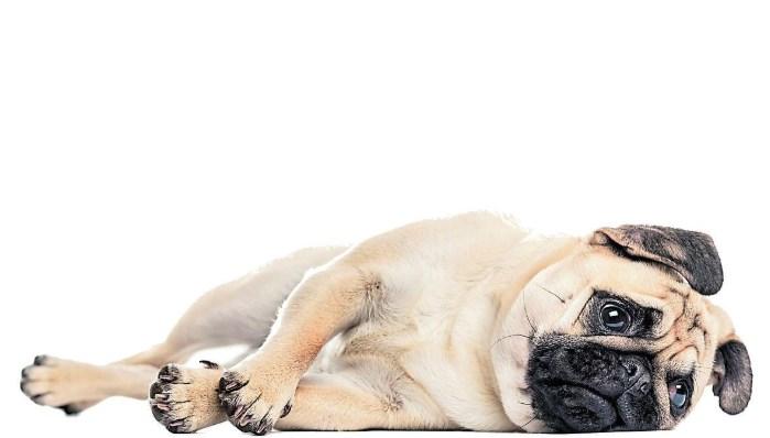 Síntomas de cuándo un perro tiene diarrea