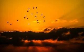 渡り鳥と夕焼け