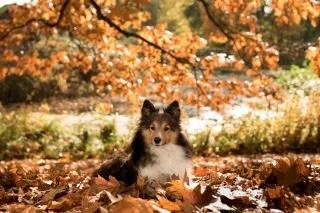 落ち葉と犬