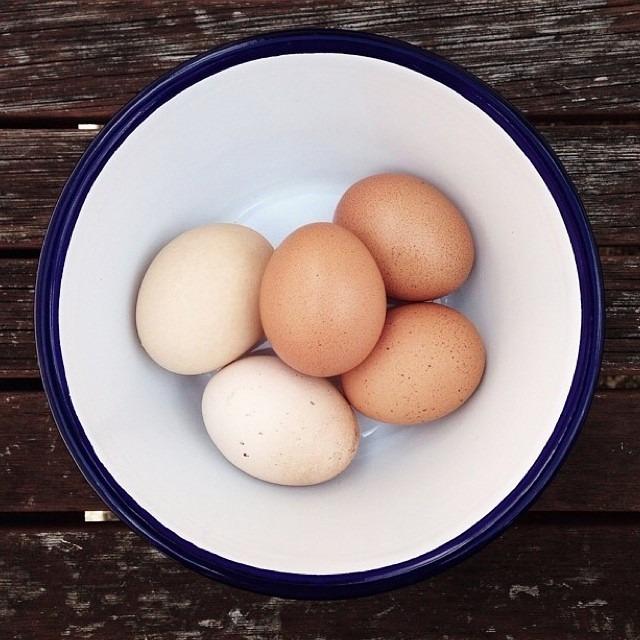 falconware eggs