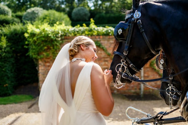 Animals at Weddings - How to Incorporate Animals Into Your Wedding Day