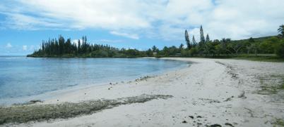 turtle-beach-1