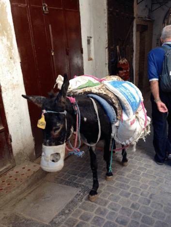Donkey in Medina