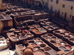 Tannery 2