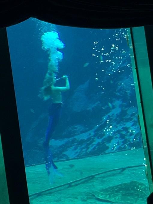 Weeki Wachee Springs Mermaid Shows