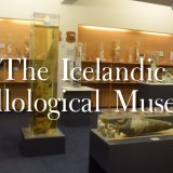 Iceland's Penis Museum (The Icelandic Phallological Museum)