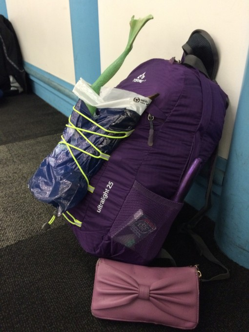 """Pushing the limits of the """"free personal item"""" on low cost airlines"""