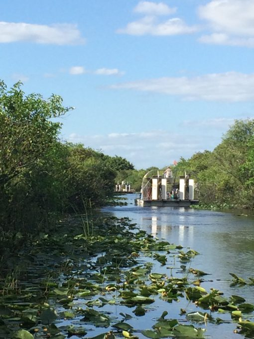 The Florida Everglades from an airboat. Life goals!