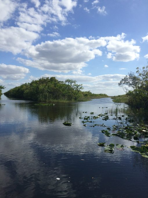 The Florida Everglades. Kinda pretty for a giant swamp.