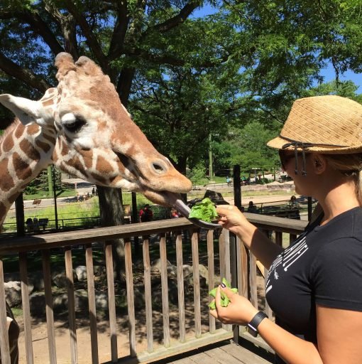 Feeding giraffes at the Milwaukee Zoo
