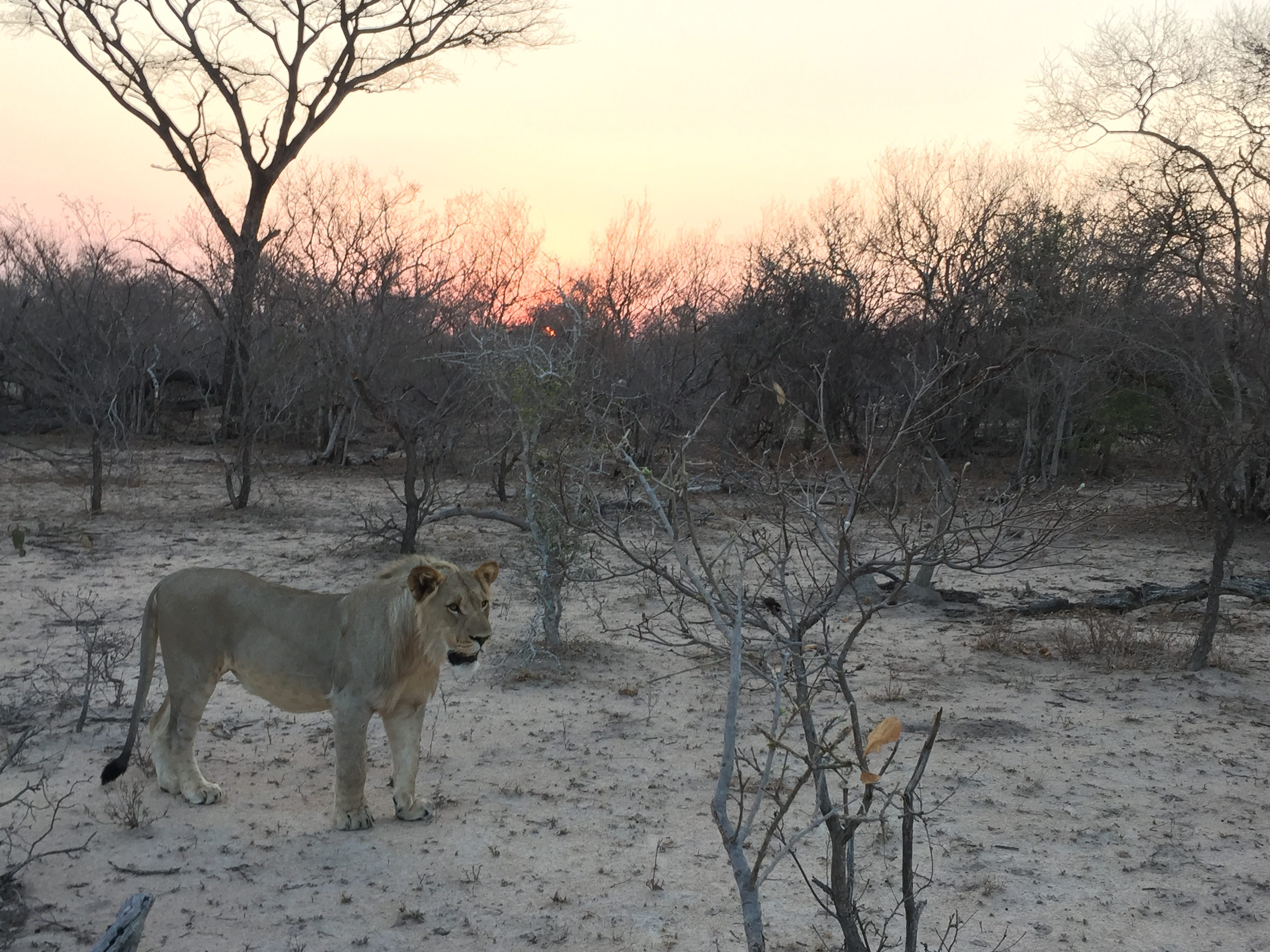 3 Ways to Save on Safari in South Africa - Mags On The Move