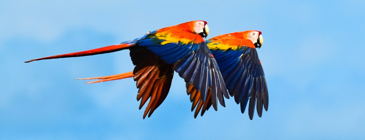Best wildlife to see in the Amazon in Peru