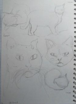 ~ Cat sketches in pencil