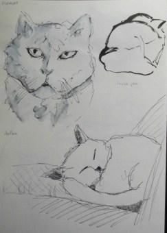 ~ Cat sketches