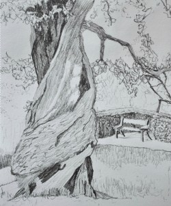 Winding Dartington tree, graphite