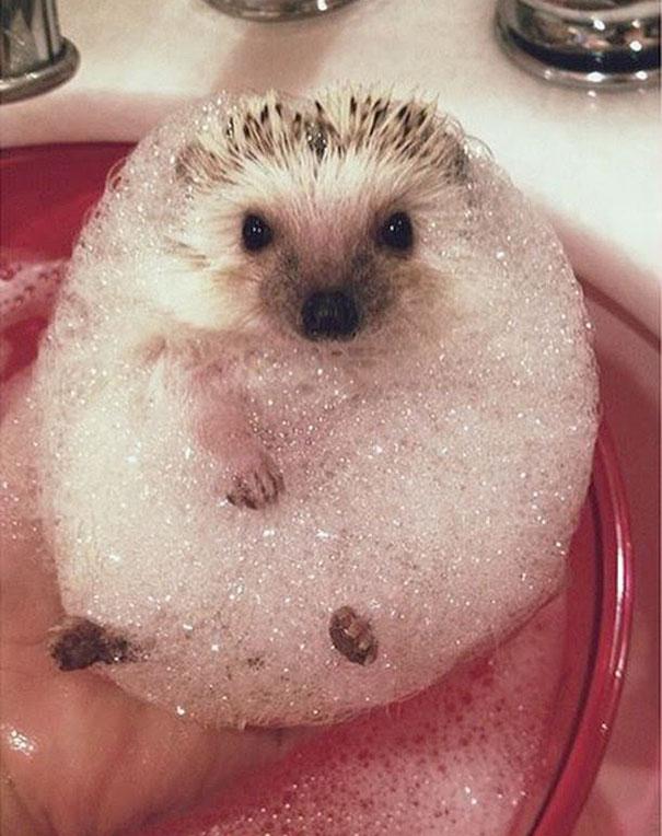 1-XX-animals-that-enjoys-taking-a-bath-2__605