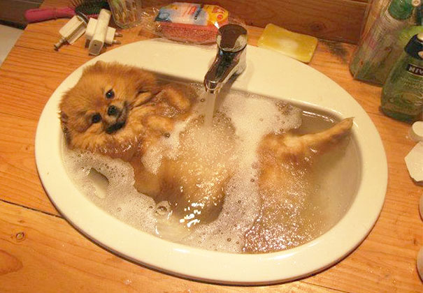 14-XX-animals-that-enjoys-taking-a-bath-5__605