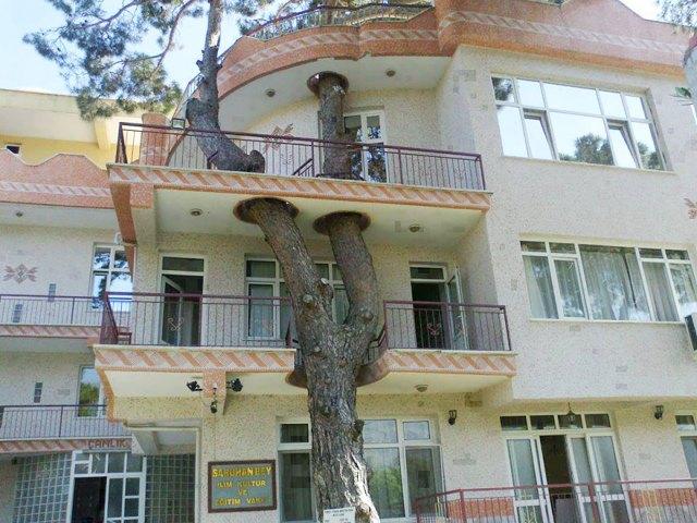 2-architecture-around-the-trees-1__880