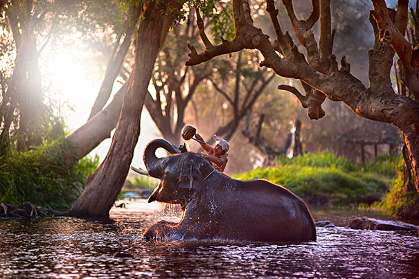 8-animals-taking-bath-13__605