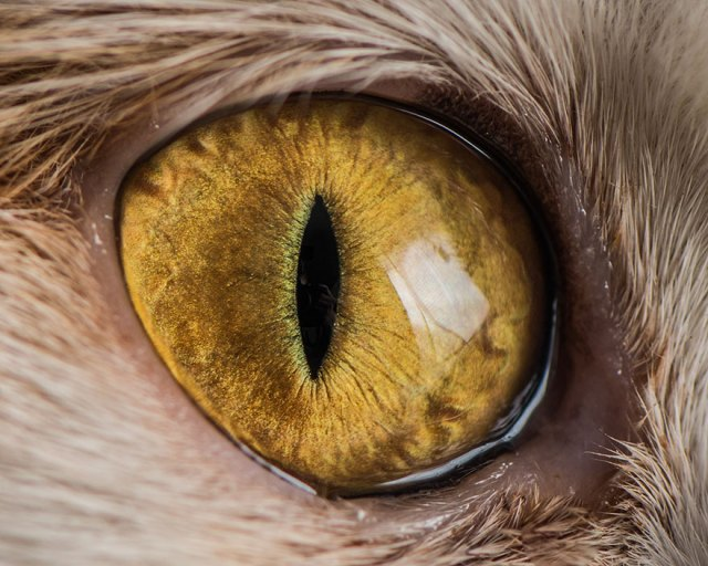 4-15-Macro-Shots-of-Cat-Eyes2__880