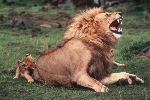 4-aslan