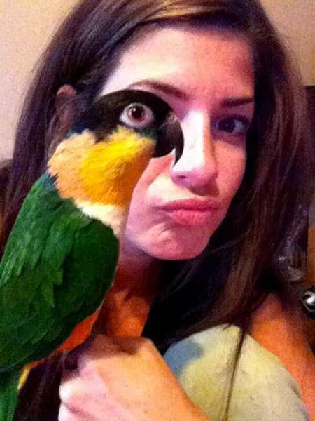 5-papagan