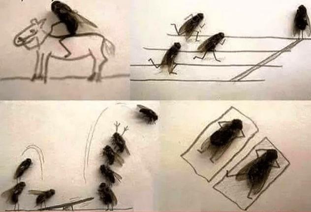13-sinekler