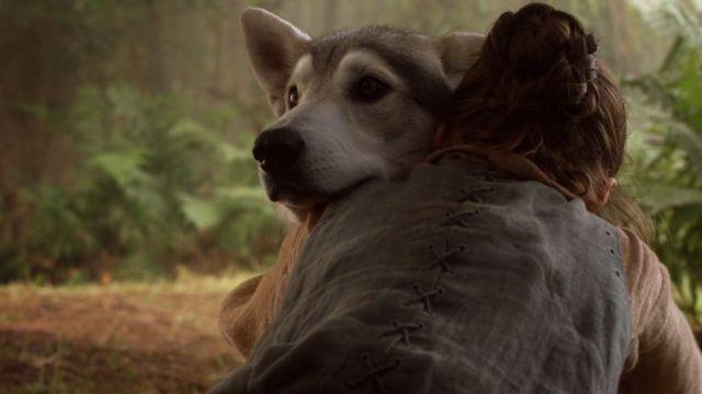 Arya Stark 'ın Kurdu - Nymeria