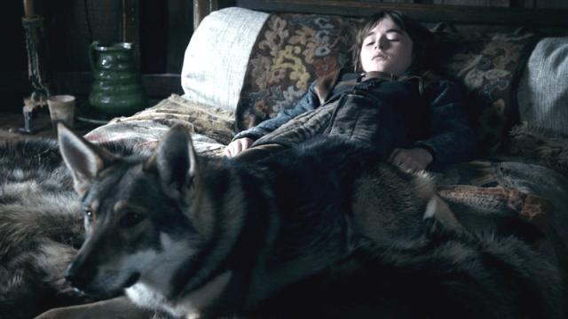 Bran Stark 'ın Kurdu - Summer