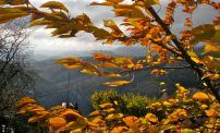 Turning leaves in fierce wind