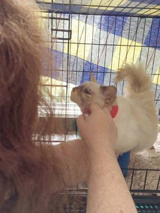 Giving smoochies and getting face scratchies