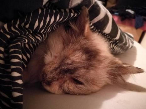 Falling asleep in the warm.
