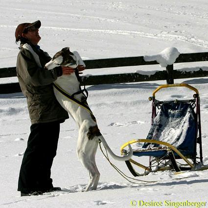 avalon-schlitten-20090122-6