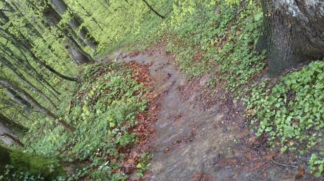 ... so sieht unser kleiner Waldweg aus!