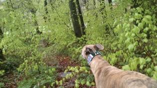 Zartgrüner Frühlingswald soweit das Auge reicht!