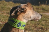 p20170225-0024_florentinesighthounds-17_evita