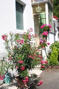 Oleander vor dem Treppeneingang mit Geranien